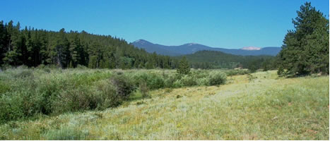 View towards Bald Mtn. from the former 1892 Frank Ayers's Homestead (NE ¼ of NW ¼ of Sec. 8)